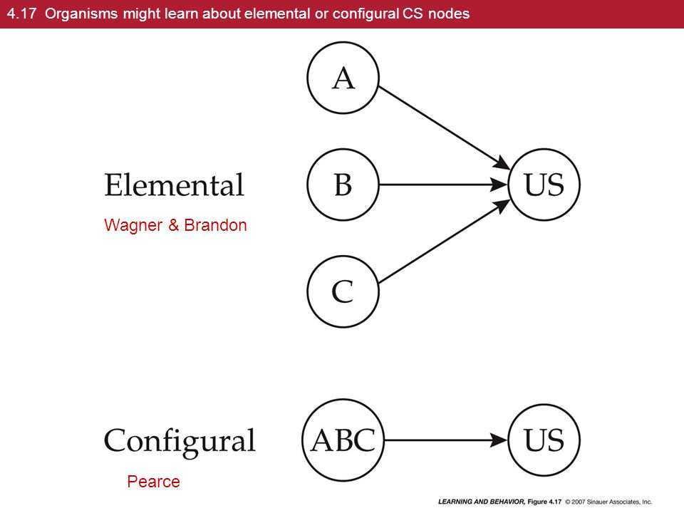 4.17 Organisms might learn about elemental or configural CS nodes Pearce Wagner & Brandon