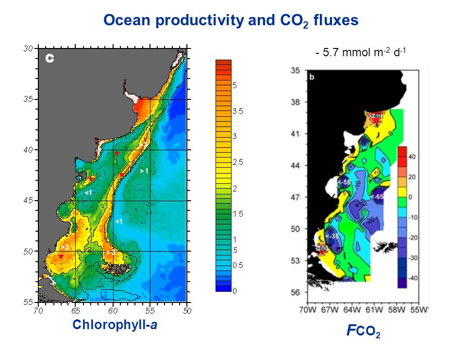  pCO 2 -30  atm Ocean productivity and CO 2 fluxes Chlorophyll-a F CO 2 - 5.7 mmol m -2 d -1