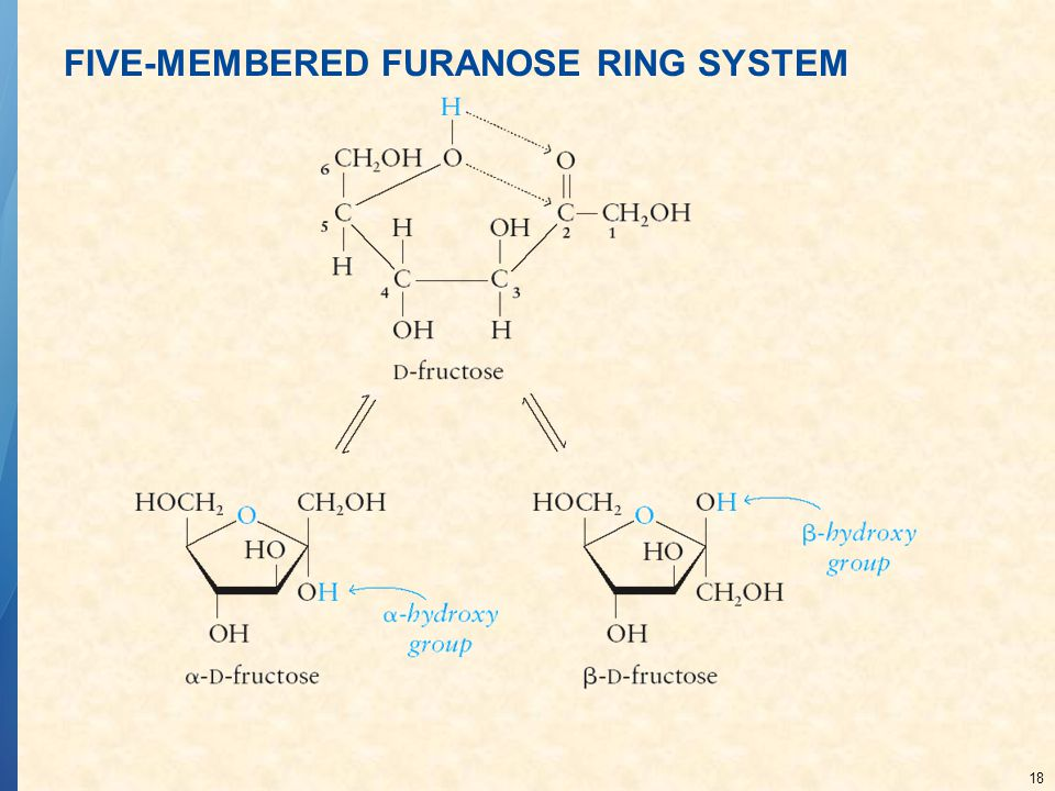 18 FIVE-MEMBERED FURANOSE RING SYSTEM