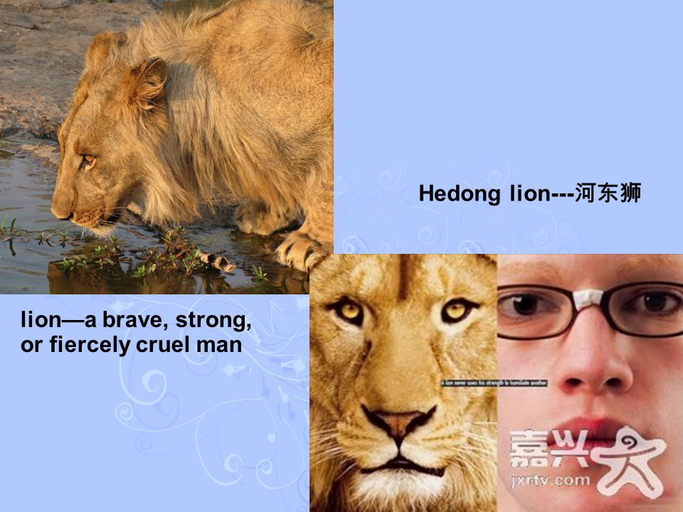 lion—a brave, strong, or fiercely cruel man Hedong lion--- 河东狮