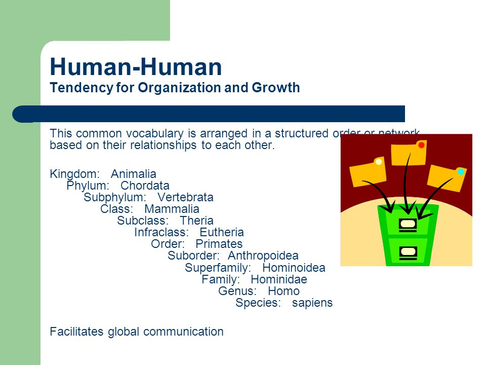 Human-Human Tendency for Organization and Growth This common vocabulary is arranged in a structured order or network based on their relationships to each other.