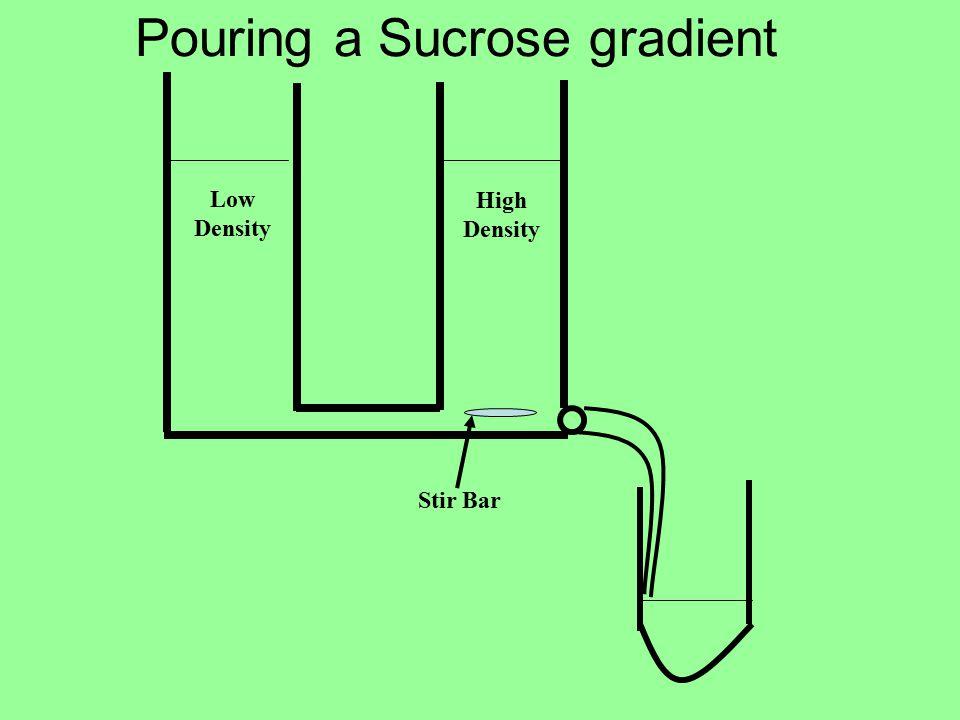 Pouring a Sucrose gradient Stir Bar High Density Low Density