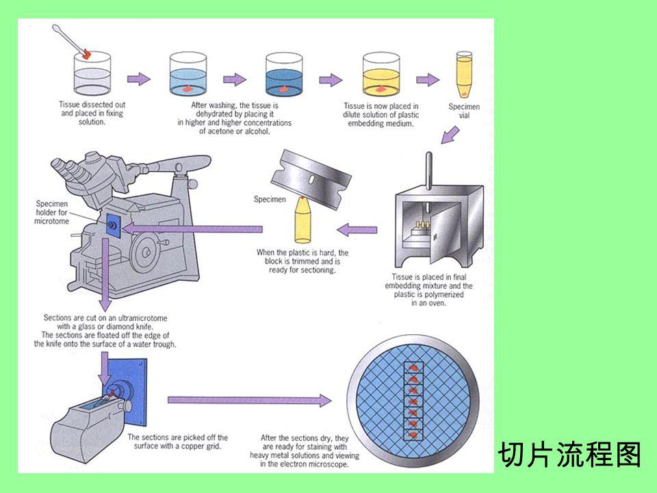 切片流程图