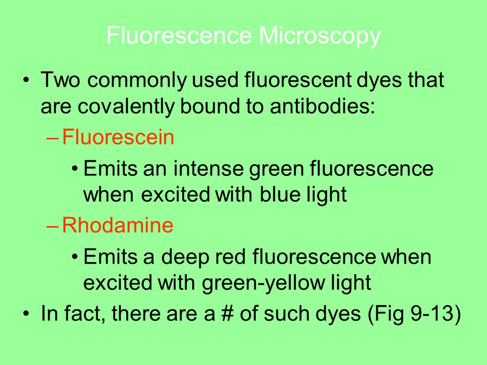 Fluorescence Microscopy Two commonly used fluorescent dyes that are covalently bound to antibodies: –Fluorescein Emits an intense green fluorescence when excited with blue light –Rhodamine Emits a deep red fluorescence when excited with green-yellow light In fact, there are a # of such dyes (Fig 9-13)