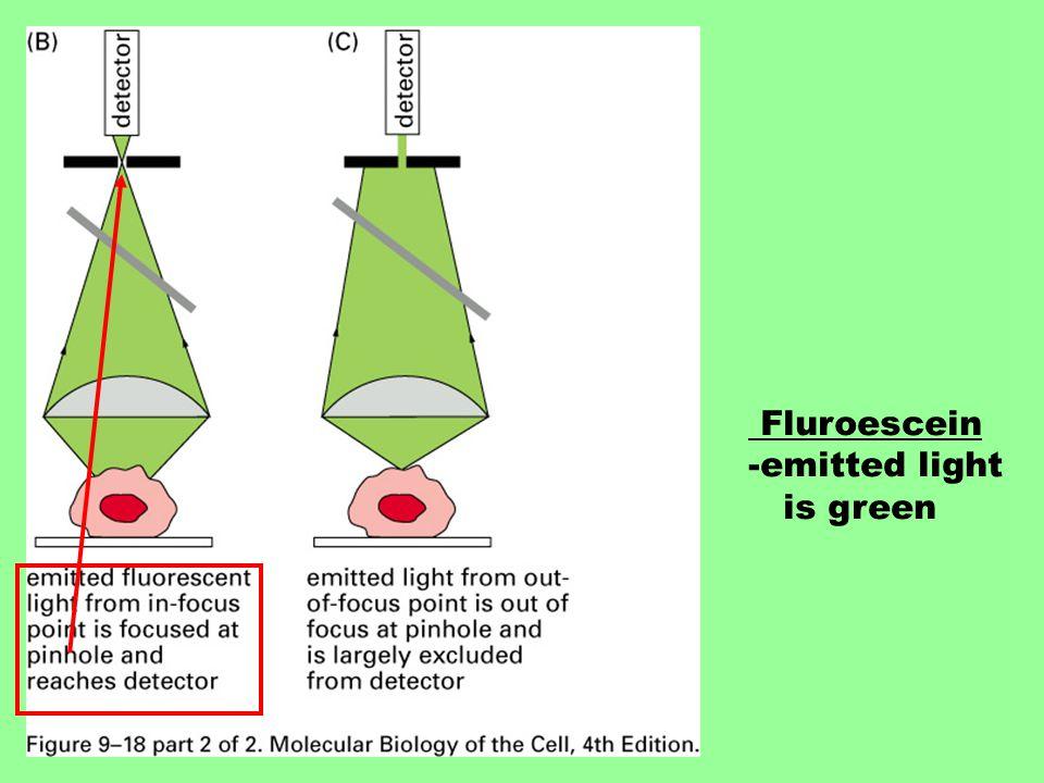 Fluroescein -emitted light is green