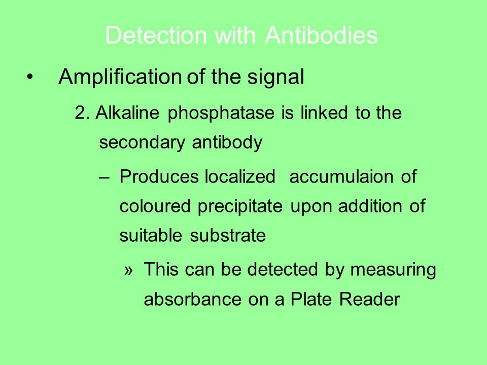 Detection with Antibodies Amplification of the signal 2.