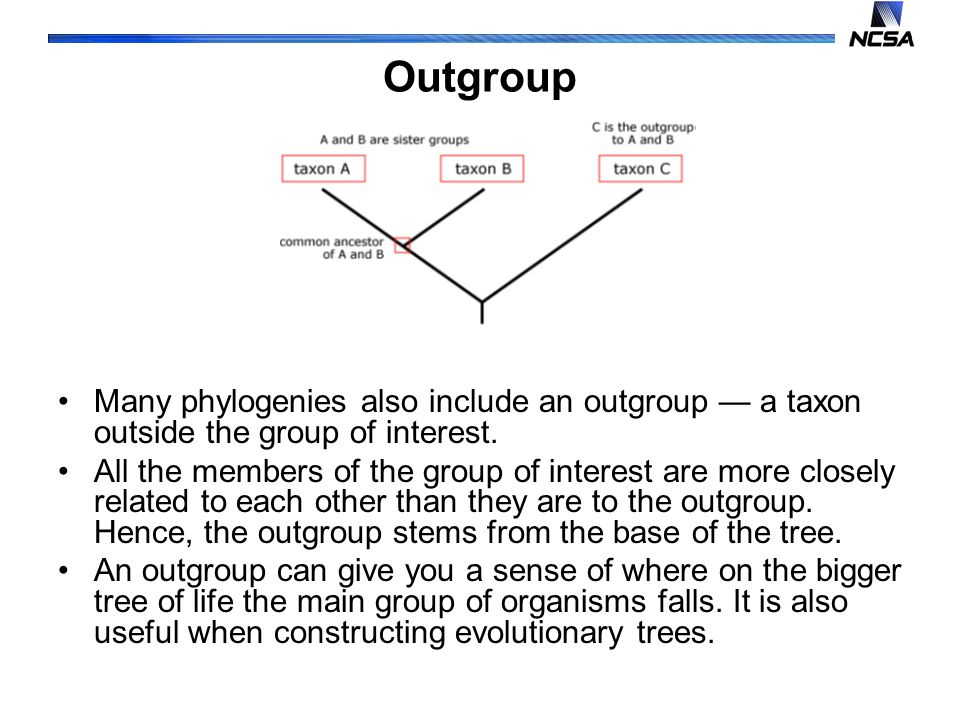 Outgroup Many phylogenies also include an outgroup — a taxon outside the group of interest.