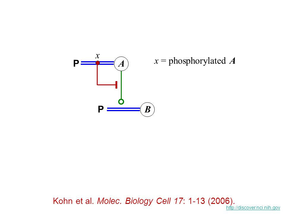 A x x = phosphorylated A P B P Kohn et al. Molec.