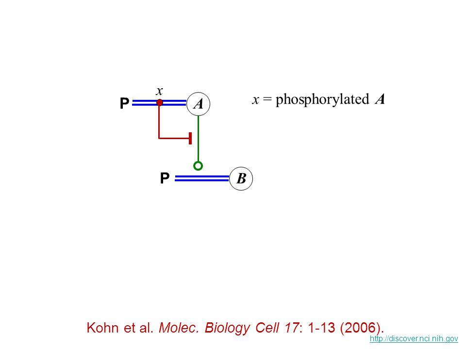 Kohn et al. Molecular Systems Biology 10.1038 (2006) An explicit model of signaling from EGFR