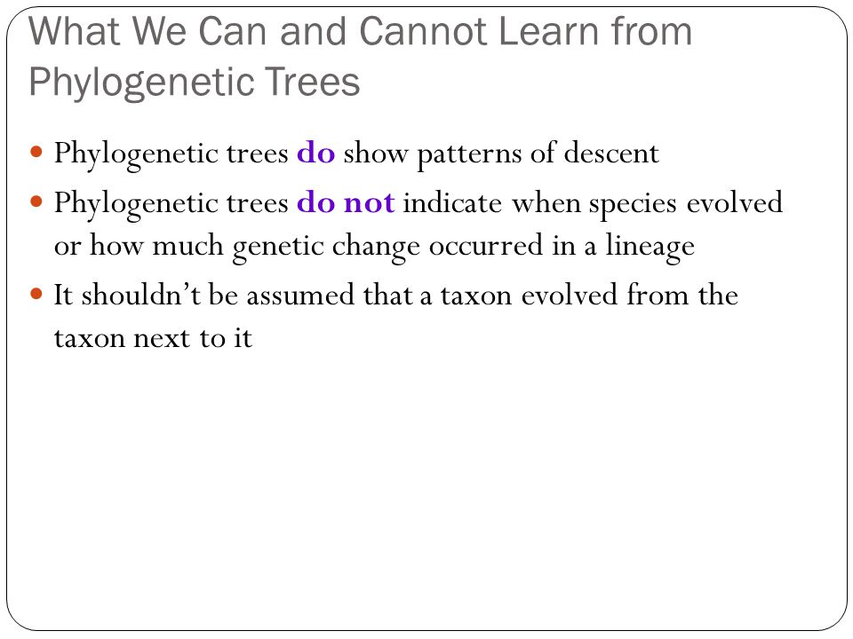 What We Can and Cannot Learn from Phylogenetic Trees Phylogenetic trees do show patterns of descent Phylogenetic trees do not indicate when species evolved or how much genetic change occurred in a lineage It shouldn't be assumed that a taxon evolved from the taxon next to it