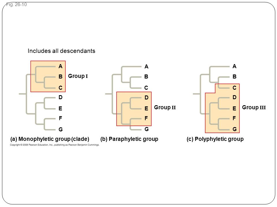 Fig. 26-10 A A A BBB CCC D D D EEE FF F G GG Group III Group II Group I (a) Monophyletic group (clade) (b) Paraphyletic group (c) Polyphyletic group I