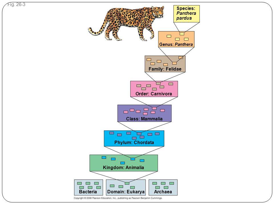 Fig. 26-3 Species: Panthera pardus Genus: Panthera Family: Felidae Order: Carnivora Class: Mammalia Phylum: Chordata Kingdom: Animalia ArchaeaDomain: