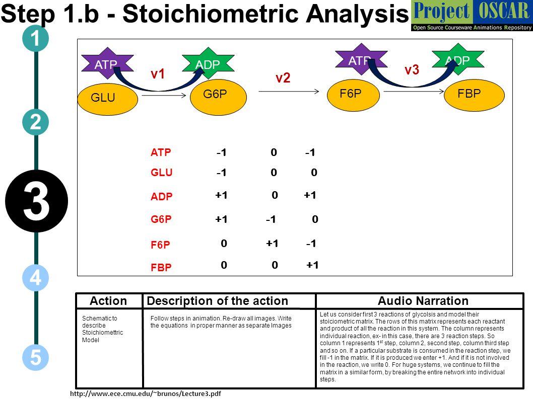 ActionAudio Narration 1 5 3 2 4 Description of the action GLU G6P ATPADP FBP ATPADP ATP GLU ADP G6P F6P FBP F6P +1 0 0 0 0 0 +1 0 0 +1 0 +1 v1 v3 v2 S