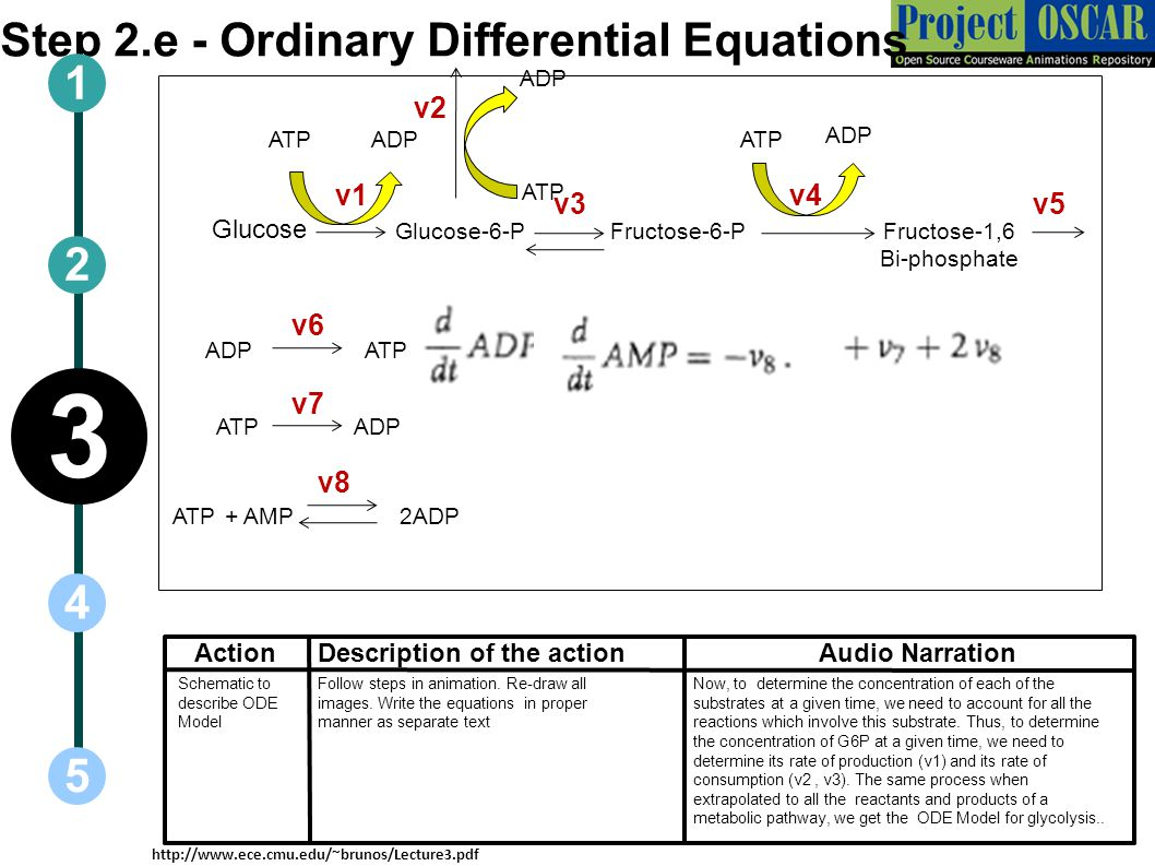 Step 2.e - Ordinary Differential Equations ActionAudio Narration 1 5 3 2 4 Description of the action Glucose Glucose-6-PFructose-6-PFructose-1,6 Bi-ph