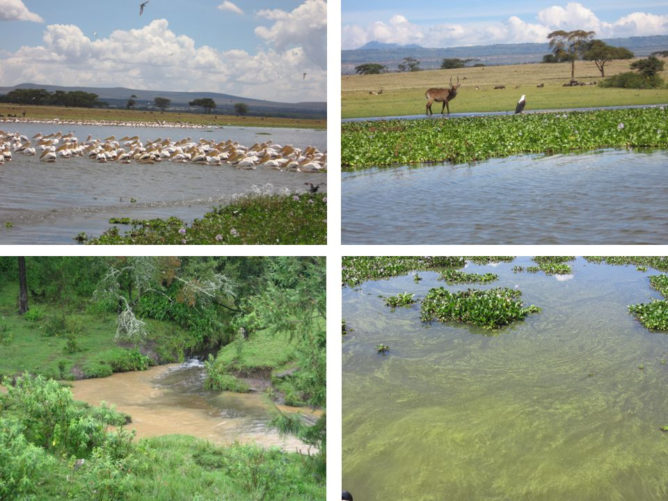RESULTS: LAKE LEVELS WOTRO EOIA project Naivasha 15