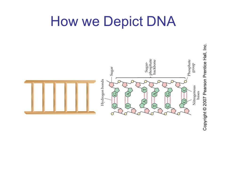 How we Depict DNA