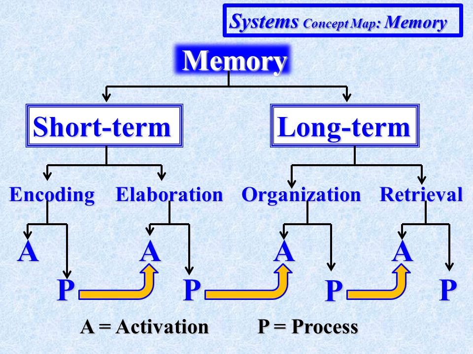 Short-termLong-term EncodingOrganizationRetrievalElaboration A P A = Activation P = Process A P A P A P Hierarchical Concept Map : Memory Memory Memory