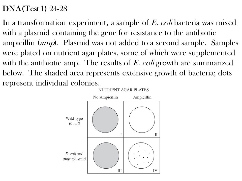 In a transformation experiment, a sample of E. coli bacteria was mixed with a plasmid containing the gene for resistance to the antibiotic ampicillin
