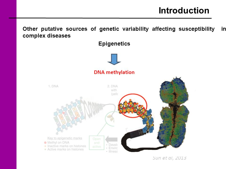 Introduction Sun et al, 2013 Other putative sources of genetic variability affecting susceptibility in complex diseases Epigenetics DNA methylation