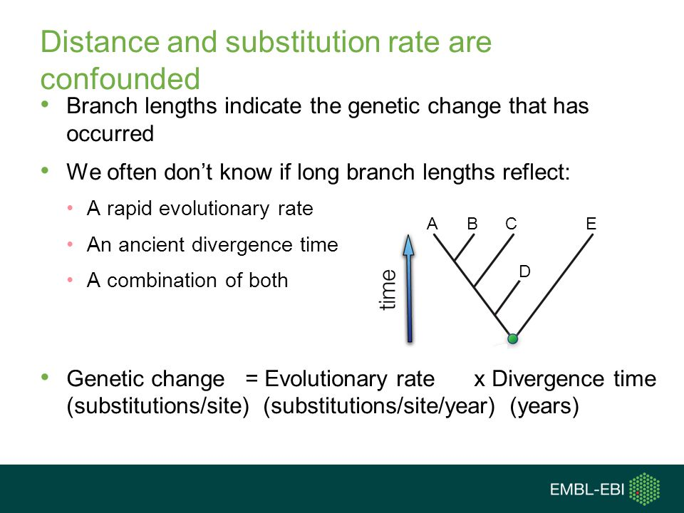 Distance and substitution rate are confounded Branch lengths indicate the genetic change that has occurred We often don't know if long branch lengths