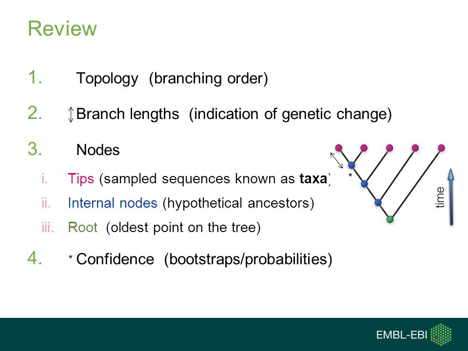 Review 1. Topology (branching order) 2. Branch lengths (indication of genetic change) 3. Nodes i.Tips (sampled sequences known as taxa) ii.Internal no