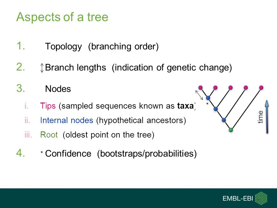 Aspects of a tree 1. Topology (branching order) 2. Branch lengths (indication of genetic change) 3. Nodes i.Tips (sampled sequences known as taxa) ii.