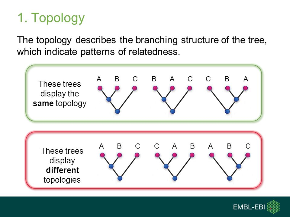 Topology Question Are these topologies the same? Answer = yes