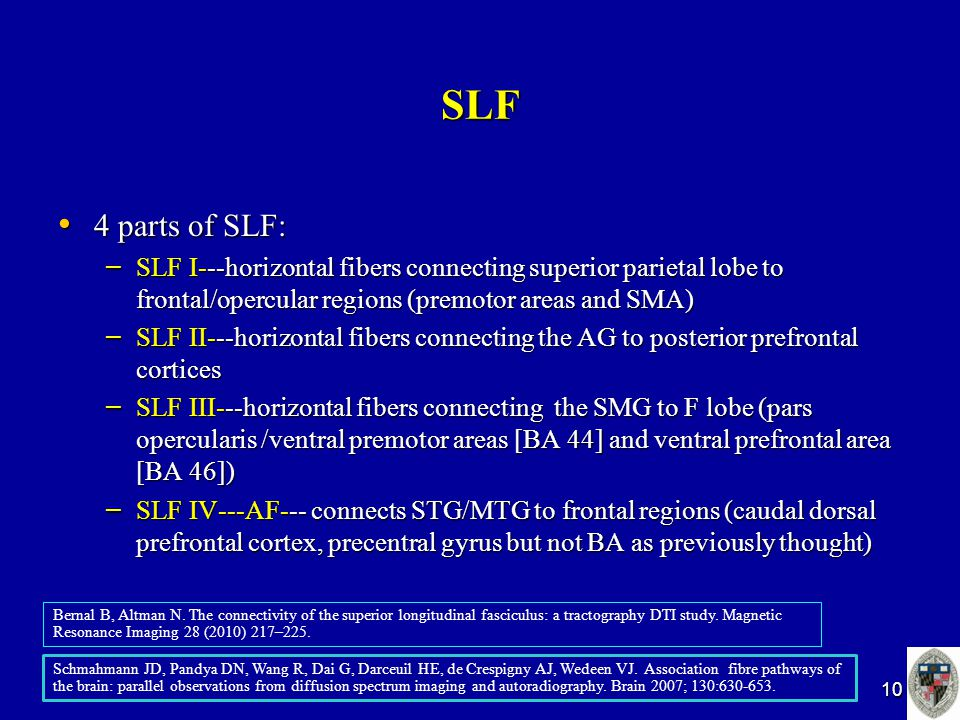 SLF 4 parts of SLF: 4 parts of SLF: – SLF I---horizontal fibers connecting superior parietal lobe to frontal/opercular regions (premotor areas and SMA) – SLF II---horizontal fibers connecting the AG to posterior prefrontal cortices – SLF III---horizontal fibers connecting the SMG to F lobe (pars opercularis /ventral premotor areas [BA 44] and ventral prefrontal area [BA 46]) – SLF IV---AF--- connects STG/MTG to frontal regions (caudal dorsal prefrontal cortex, precentral gyrus but not BA as previously thought) 10 Bernal B, Altman N.