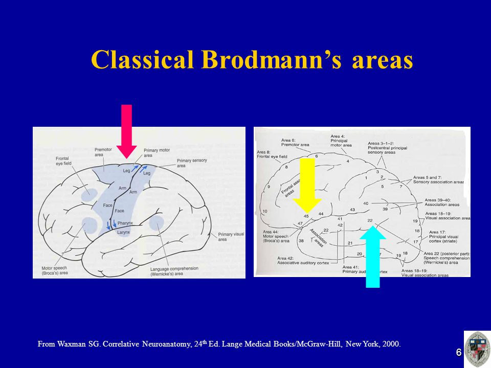 6 Classical Brodmann's areas From Waxman SG. Correlative Neuroanatomy, 24 th Ed. Lange Medical Books/McGraw-Hill, New York, 2000.