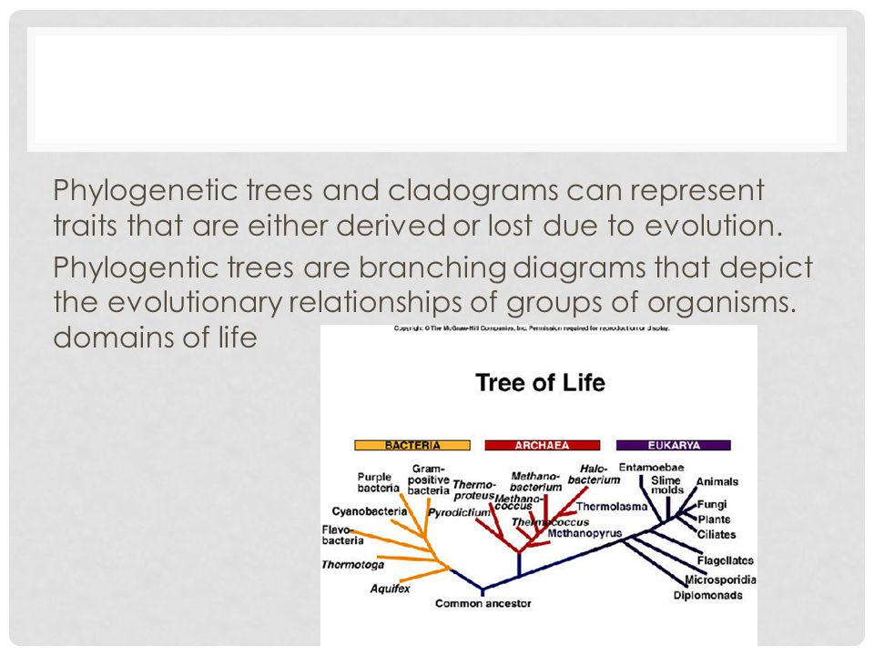 Phylogenetic trees and cladograms can represent traits that are either derived or lost due to evolution. Phylogentic trees are branching diagrams that