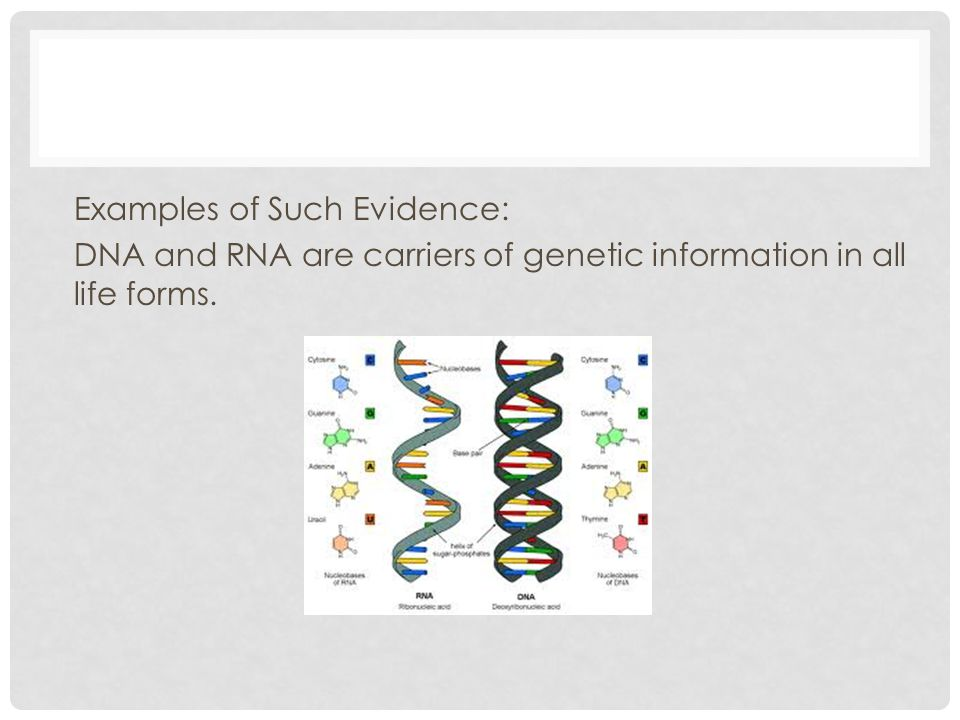 Examples of Such Evidence: DNA and RNA are carriers of genetic information in all life forms.