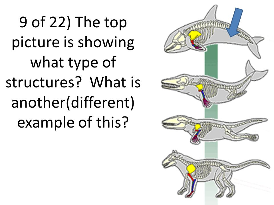 9 of 22) The top picture is showing what type of structures.