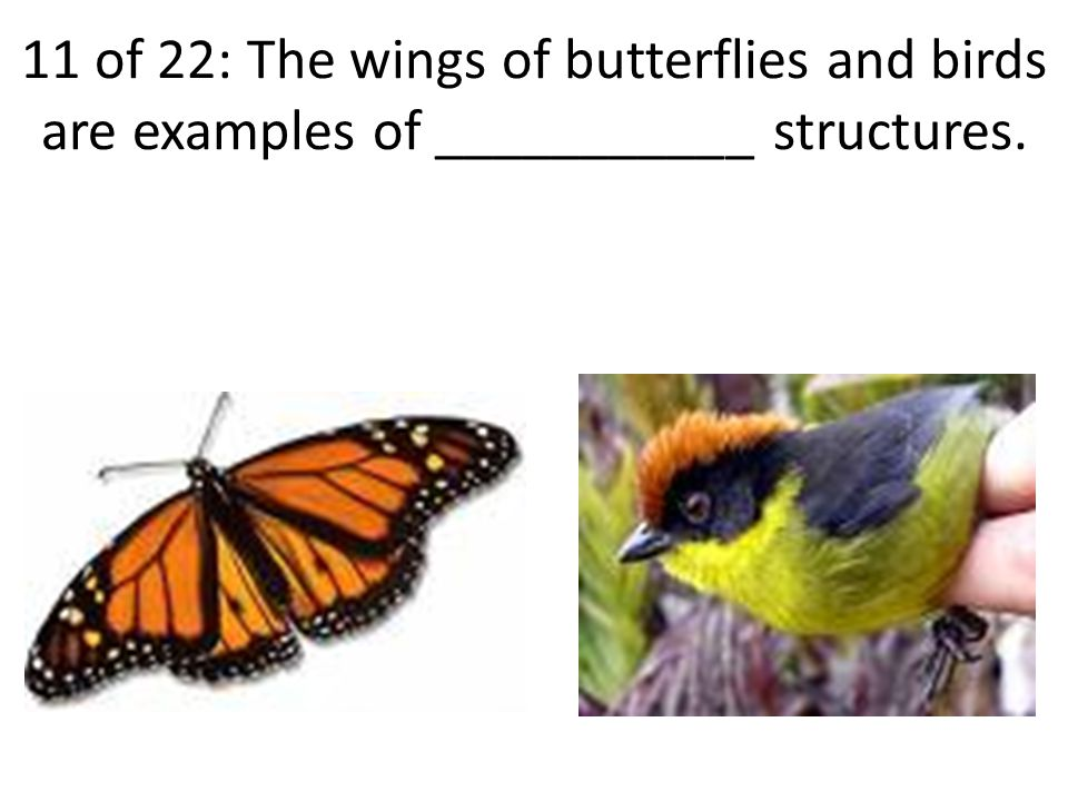11 of 22: The wings of butterflies and birds are examples of ___________ structures.