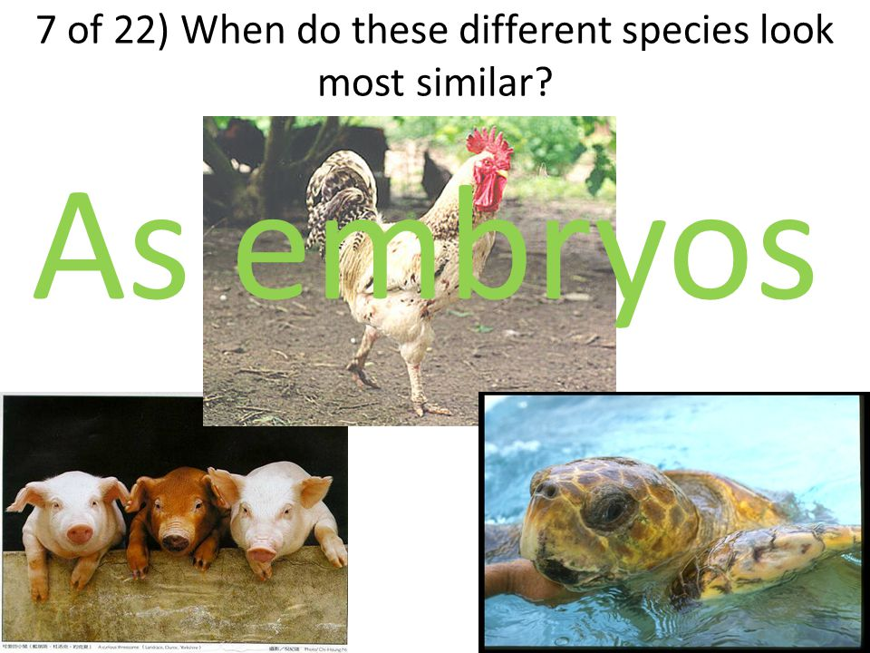 7 of 22) When do these different species look most similar As embryos