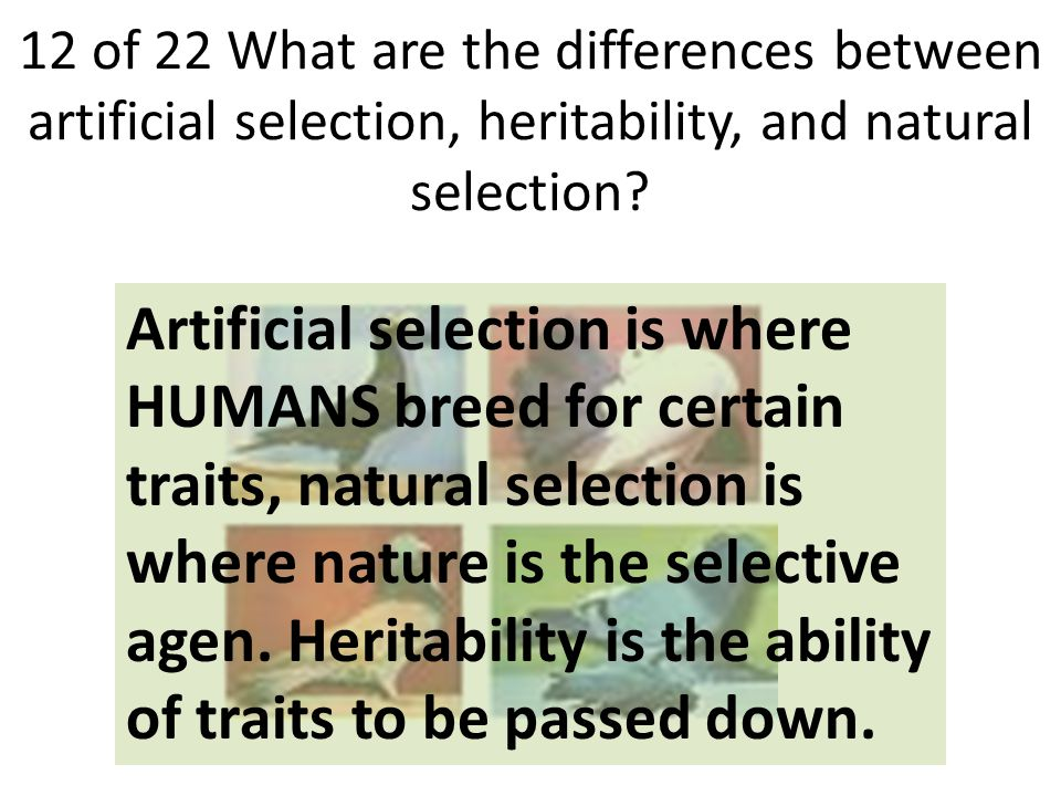 12 of 22 What are the differences between artificial selection, heritability, and natural selection.