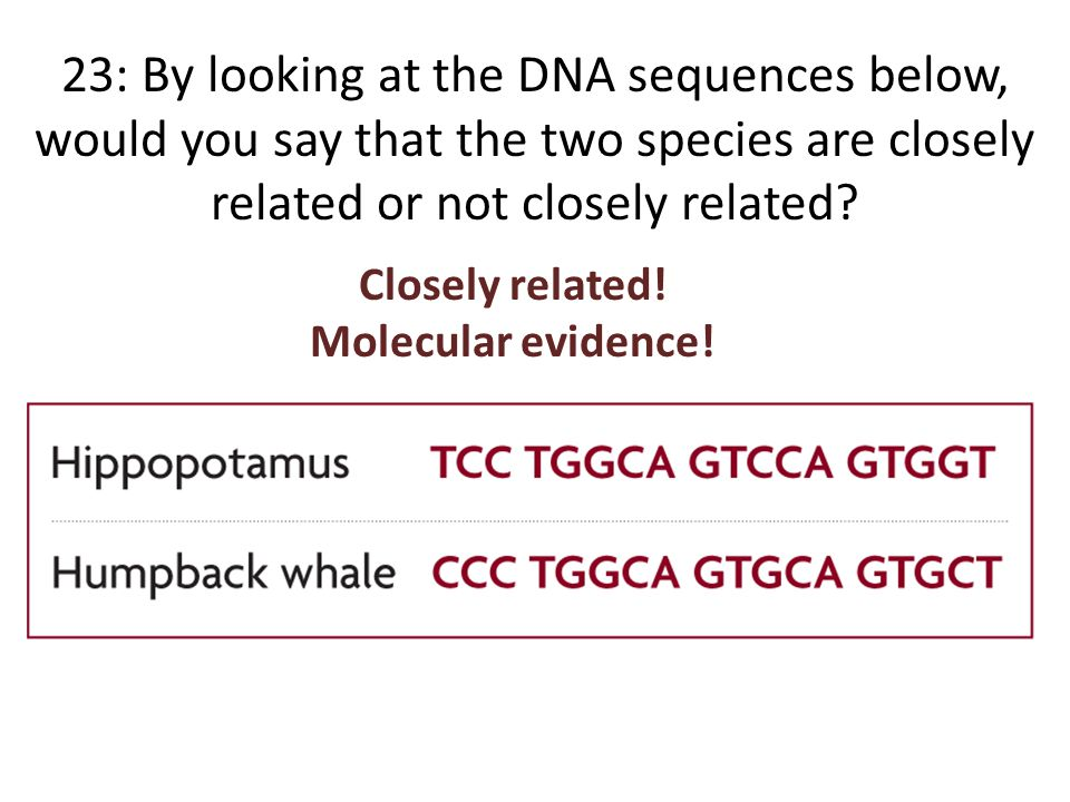 23: By looking at the DNA sequences below, would you say that the two species are closely related or not closely related.