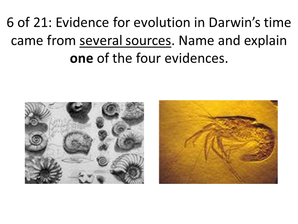 6 of 21: Evidence for evolution in Darwin's time came from several sources.