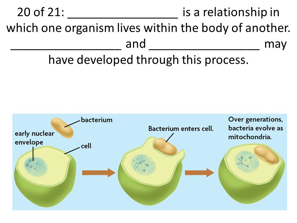 20 of 21: _________________ is a relationship in which one organism lives within the body of another.