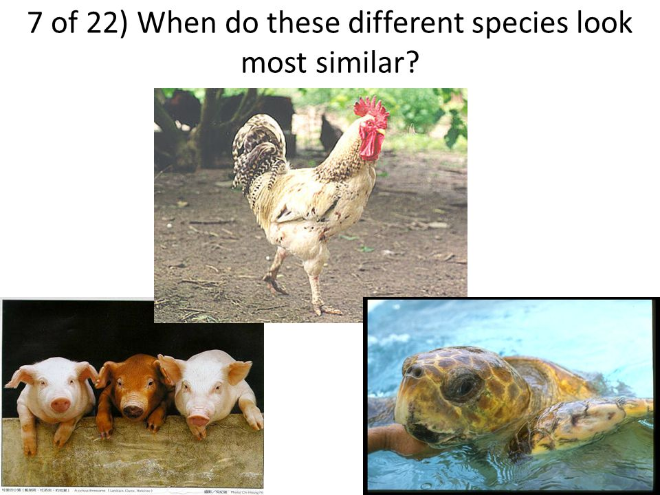 7 of 22) When do these different species look most similar