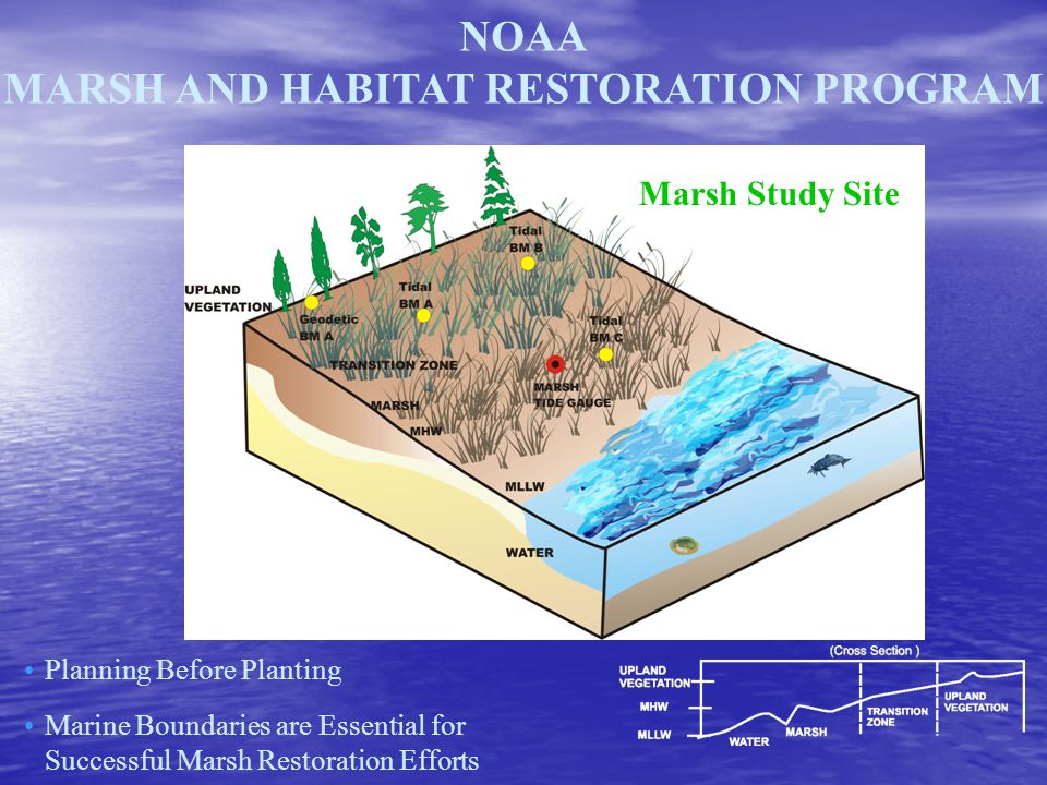NOAA MARSH AND HABITAT RESTORATION PROGRAM Marsh Study Site Planning Before Planting Marine Boundaries are Essential for Successful Marsh Restoration Efforts