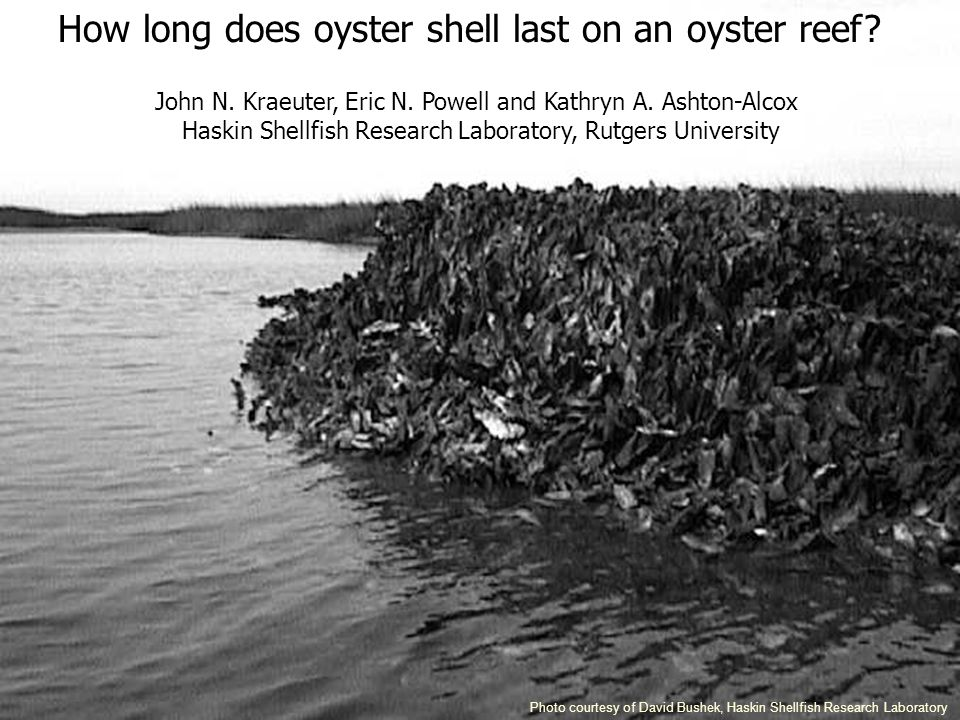 How long does oyster shell last on an oyster reef.