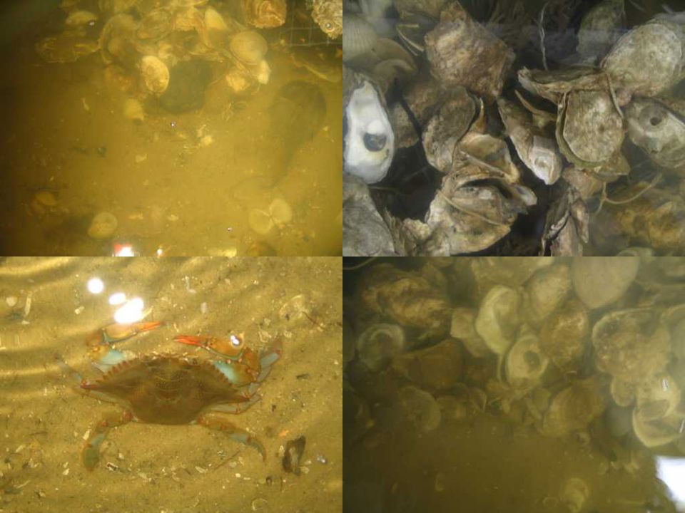 Doubling times and half-lives of shell on New Jersey oyster beds for the time period of 1998 to 2005 Years i