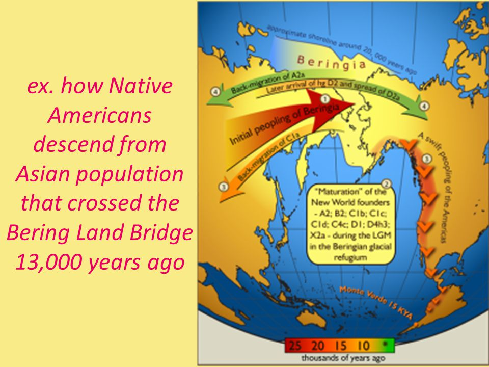 ex. how Native Americans descend from Asian population that crossed the Bering Land Bridge 13,000 years ago