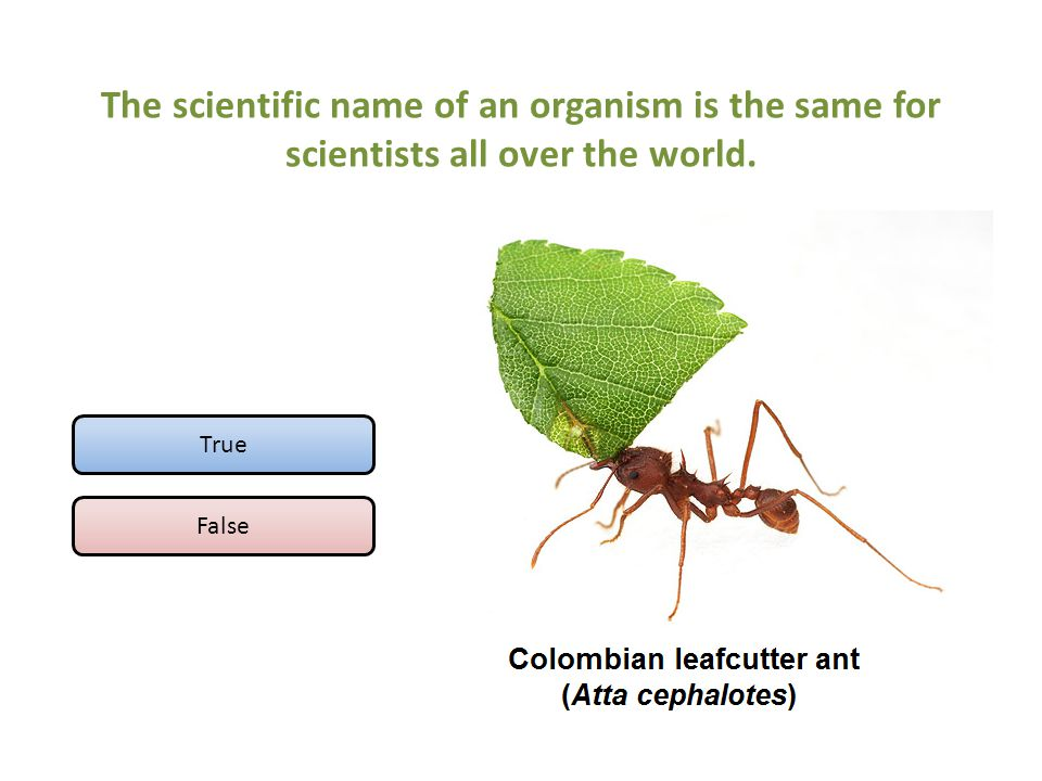 The scientific name of an organism is the same for scientists all over the world. True False