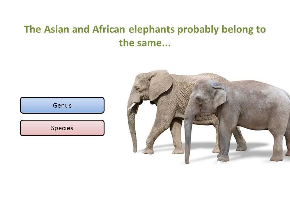 The Asian and African elephants probably belong to the same... Genus Species