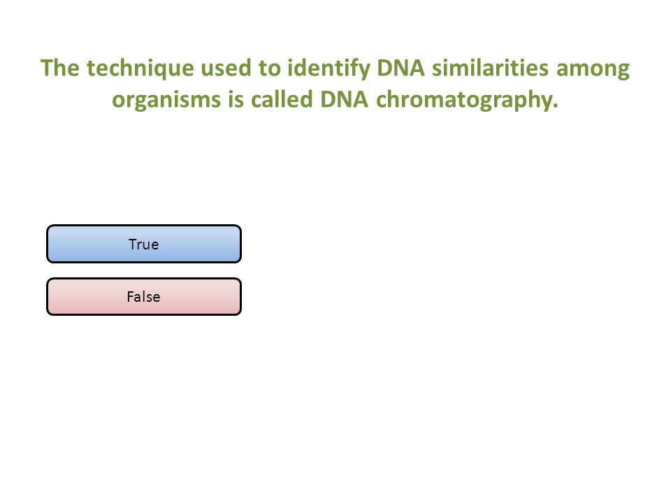 The technique used to identify DNA similarities among organisms is called DNA chromatography. True False
