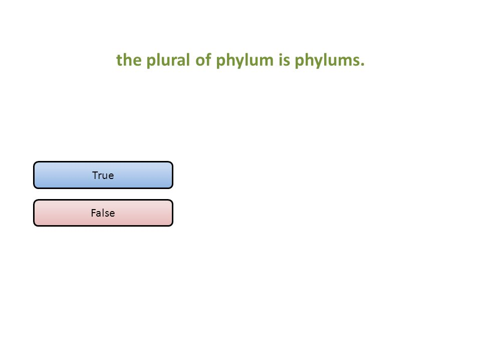 the plural of phylum is phylums. True False