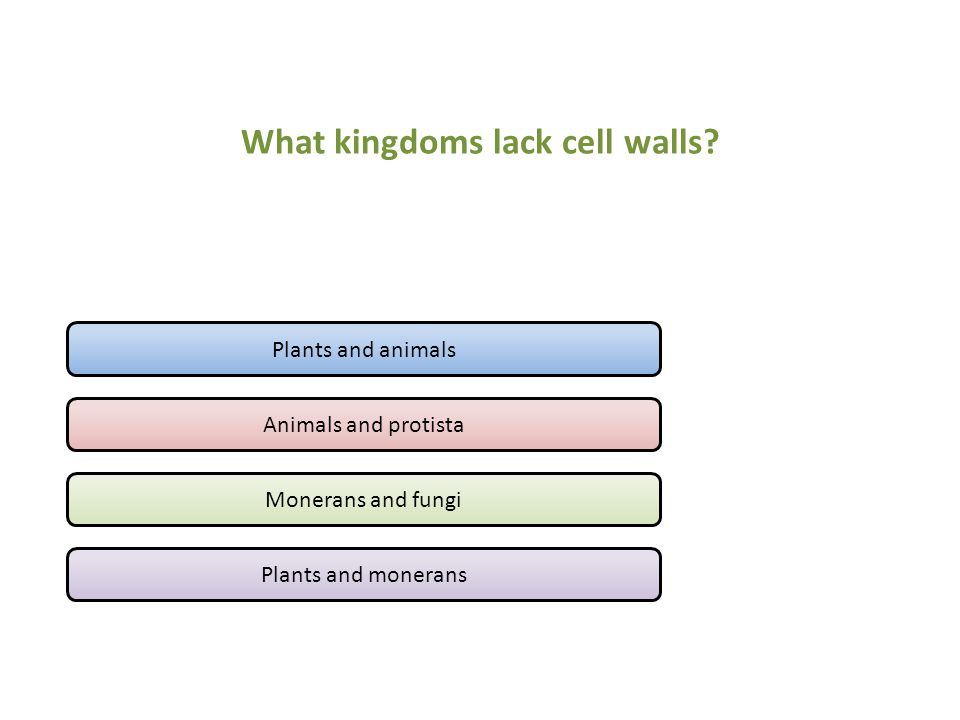 What kingdoms lack cell walls? Plants and animals Animals and protista Monerans and fungi Plants and monerans