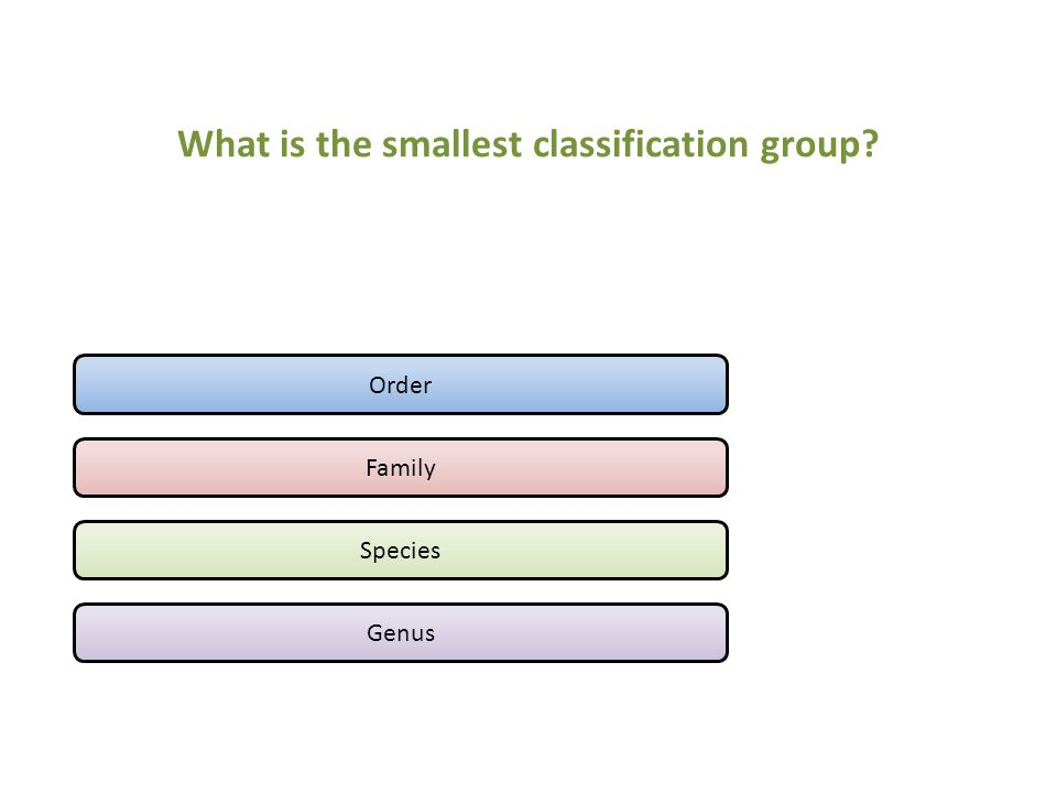 What is the smallest classification group? Order Family Species Genus