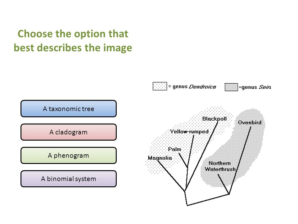 A taxonomic tree A cladogram A phenogram A binomial system Choose the option that best describes the image